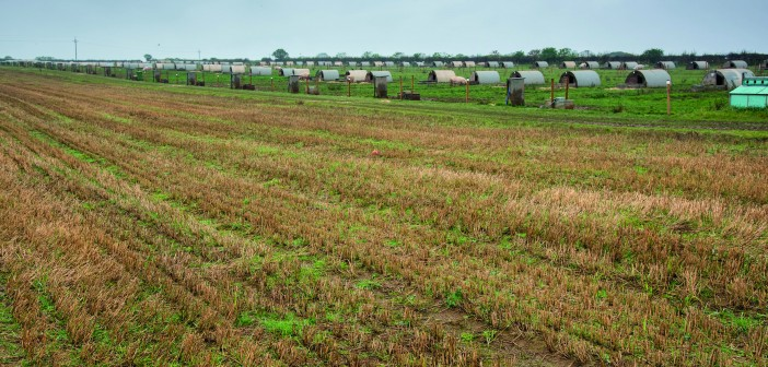 Outdoor farrowing paddocks with good green cover help to reduce surface run-off