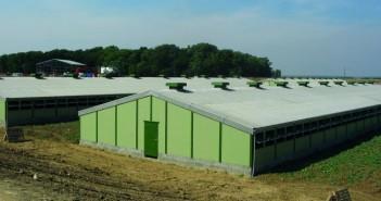 New pig building 2