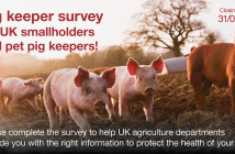 ASF smallholder survey static FB