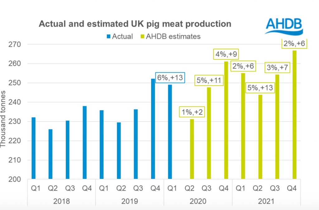 Actual and forecast pigmeat production