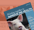 Pig World August Supplement - Improve Pig Health