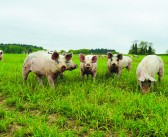 Pilgrims commits to using 100% sustainable soya as feed by 2025