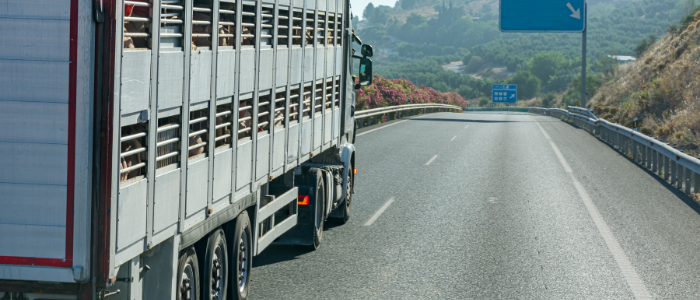 NFU responds to Welfare in Transport consultation
