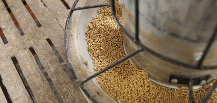 Pig feed production rose in April