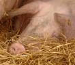 pork shelfwatch[14112]