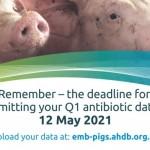 EMB Pigs