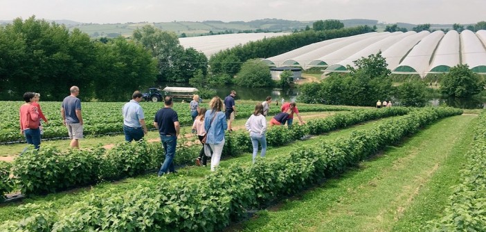 Farm walk (1)