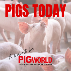 Pigs Today, the Pig World podcast available to stream on all major sites