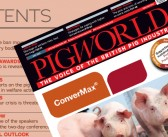 Protected: Pig World – July 2021